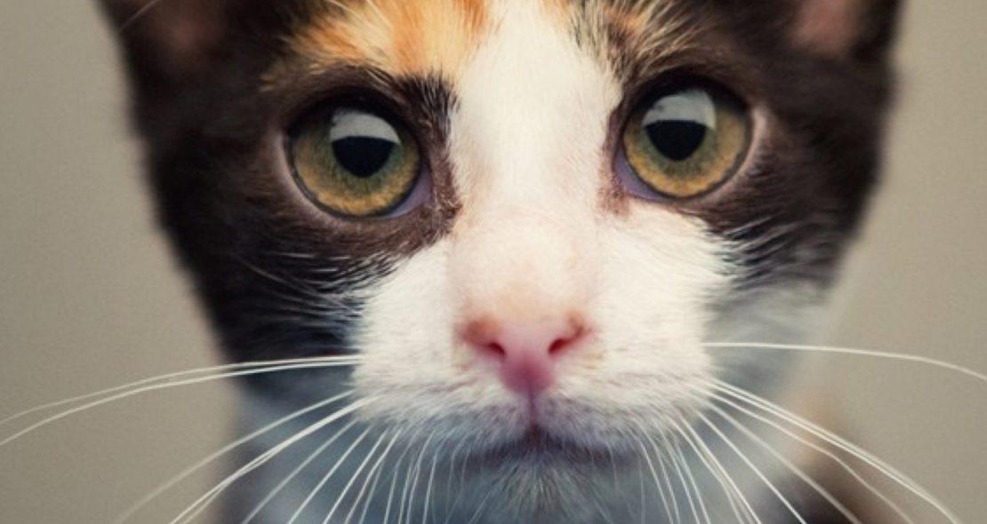 Humane Society Website